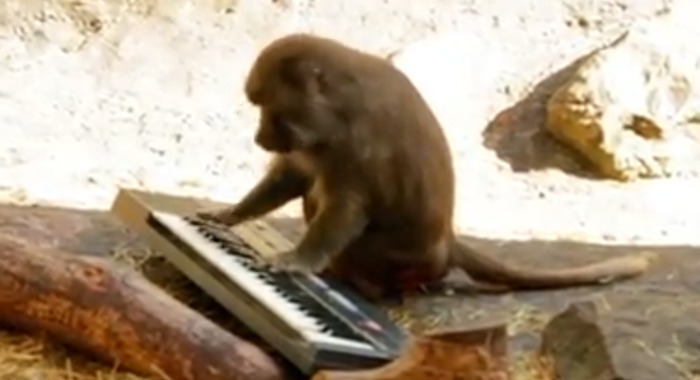 Monkeys and Synthesizers