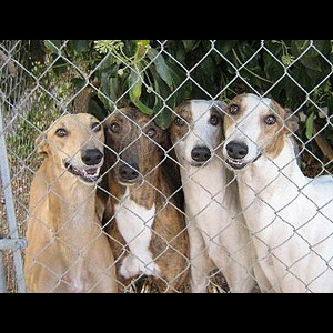 Swedish House Mafia : Absolut Greyhound